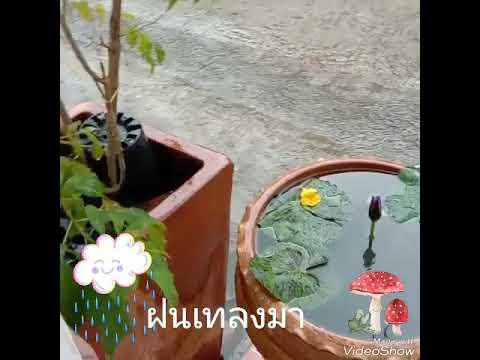 #Asmr ฝนตก ฟินดีนะ☔🌨☔