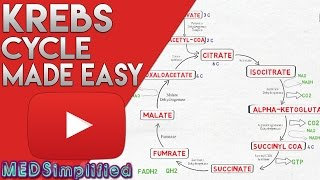 KREBS CYCLE MADE SIMPLE - TCA Cycle Carbohydrate Metabolism Made Easy
