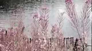 Marillion - Blind Curve (Vocal Under A Bloodlight/Passing Strangers/Mylo/Perimeter Walk/Threshold)