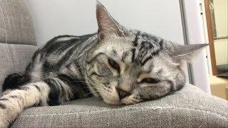 노편집 l 에픽하이 [Lullaby For A Cat]을 들은 고양이의 반응은? 너무 신기함!