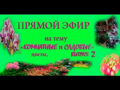 ПРЯМОЙ ЭФИР на тему КОМНАТНЫЕ и САДОВЫЕ цветы, выпуск 2