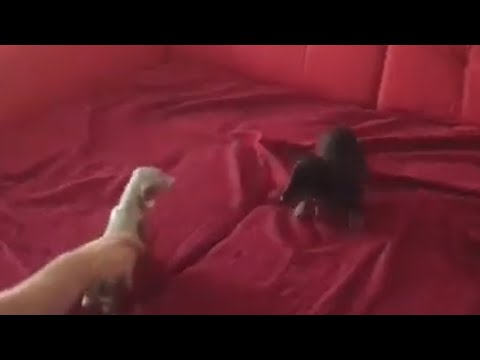 Puppy's first play date with another 'dog'