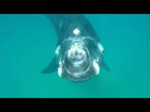 Vriendelike walvis laat my tweede kom