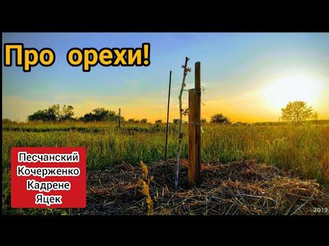 Ореховый видеоотчёт. Чернигов! Песчанский, Яцек, Кадрене, Кочерженко, Идеал.