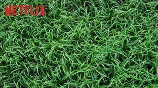 En la hierba alta (subtítulos)   Tráiler oficial Trailer