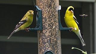 Bird Feeder 1 – Littlehouse on the Prairie