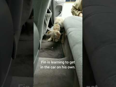 Learning to get into the car