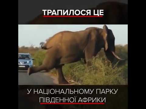Слон займається йогою