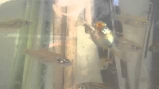 Παγκόσμια Ημέρα Μετανάστευσης Ψαριού – Βραυρώνα – Βίντεο 1