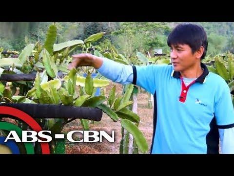 Mikoderil ng kuko halamang-singaw cream review na presyo