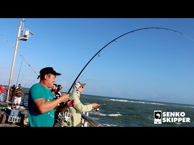 Pier Fishing: Simple fishing rig catches HUGE FISH!