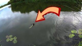 Клев рыбы на завтра в энгельсе