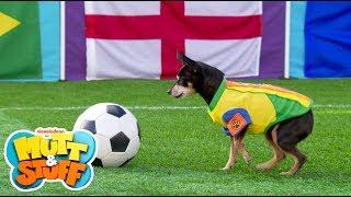 Mutt & Stuff - Soccer Dogs
