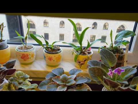 Орхидеи, влажность, много говорю ))