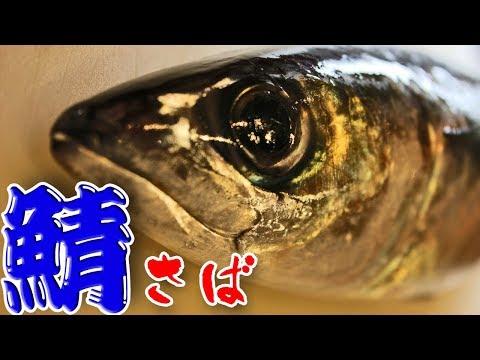さばのさばき方(Mackerel)