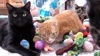10 Funny Cat Clips That Will Make You Laugh!