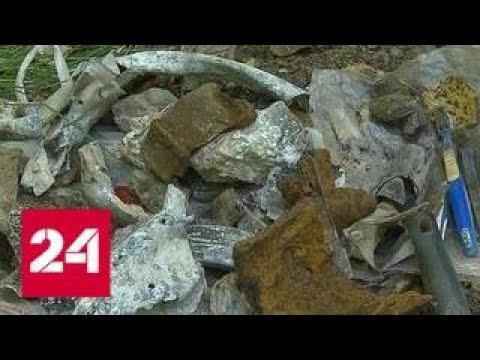 В Новокосине найден истребитель времен войны - Россия 24