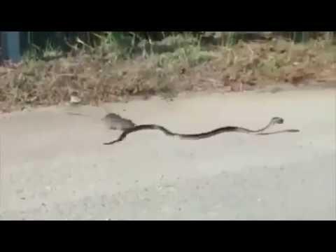Гороскоп женщина скорпион год змея