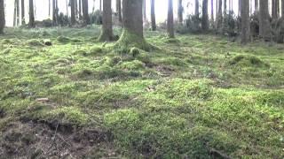Parque Natural Des Deux Ourthes en las Ardenas de Valonia -  Bélgica
