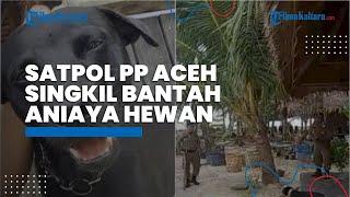 Satpol PP Aceh Singkil Mengungkap Fakta dan Kronologi soal Penganiayaan Hewan hingga Tewas