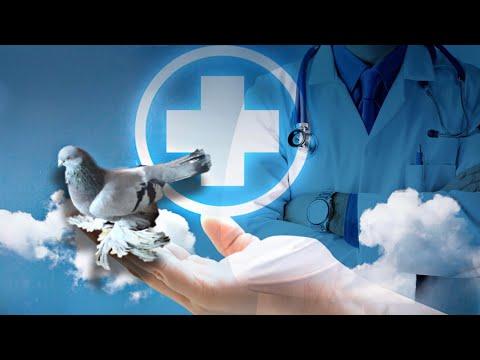 , title : 'Бойные Голуби🕊О лечении Голубей- моё мнение! #бойныеголуби #голубеводство #mtredebi #doves
