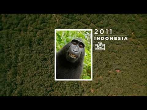 Campaña WWF
