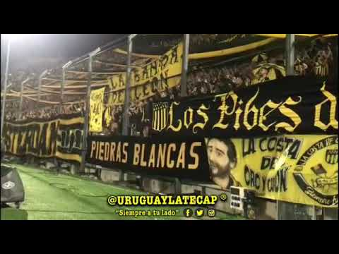 """""""Hinchada de Peñarol     La copa libertadores es mi obsesión 🎶   @URUGUAYLATECAP #SiempreATuLado"""" Barra: Barra Amsterdam • Club: Peñarol"""