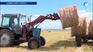 В Новгородской области активно заготавливается корм для скота