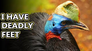 Cassowary facts: the birds with the lowest call | Animal Fact Files