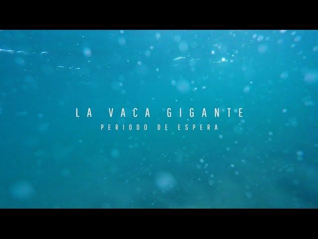"""""""Vaca gigante: Periodo de espera"""", el documental"""