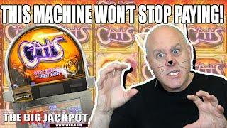 MEGA WIN$ 🙀High Limit Cats Slot Machine   The Big Jackpot