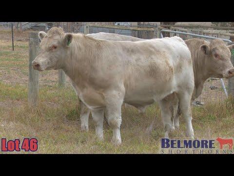 BELMORE TREMAIN Q312