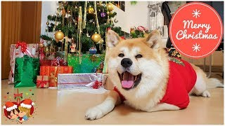 AkitaInu-DecemberStory秋田犬