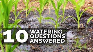 10 Ways to Water Your Garden Better