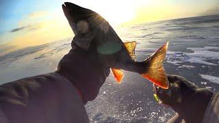 Зимняя рыбалка окуня на балансир