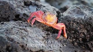 Expedition Galapagosinseln mit Silversea