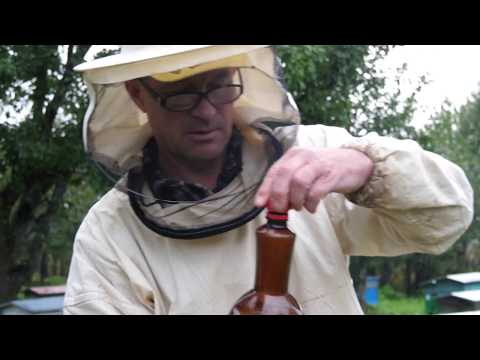 ПЧЕЛОВОДСТВО №24: О подкормке пчел