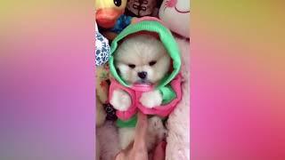 Смешные Собаки и Щенки   Подборка 2018 для Хорошего Настроения! 🐕