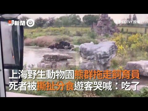 上海野生動物園的飼育員被飢餓的熊群分食了