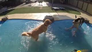 Paradise Ranch Pet Resort Dog Boarding Los Angeles 2019