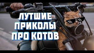 """Выпуск 5 """"Лучшие приколы с участием кошек"""""""