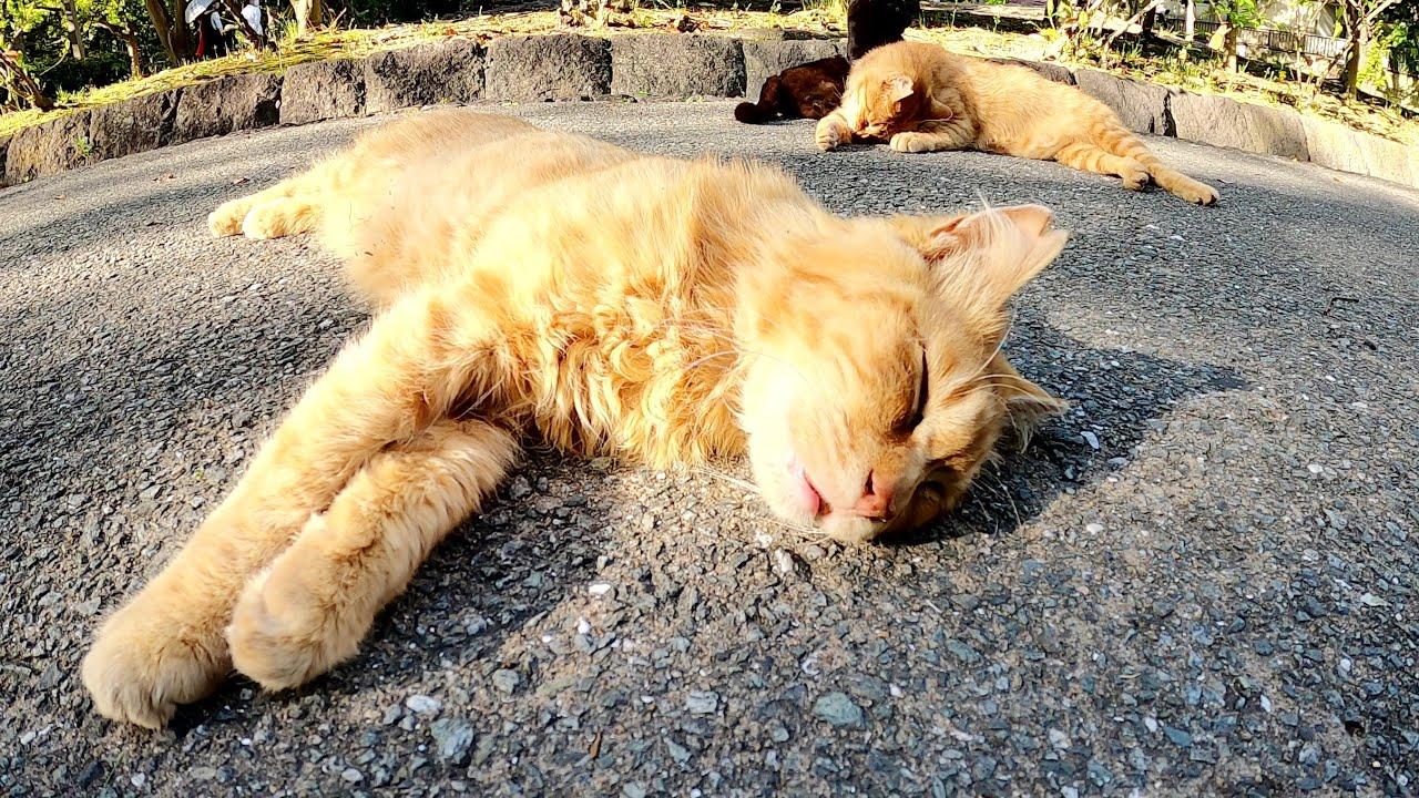 クロと茶トラの仲良し猫トリオが可愛い寝顔でスヤスヤと眠る