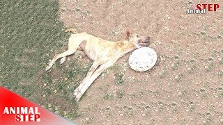 Poor Dog Hit by a Car Two Times without Treatment Until Rescuers Met Him