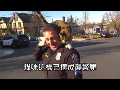 警察受訪時遭路旁的貓咪爬上頭頂,「襲警」過程讓人笑翻