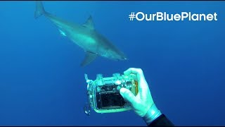 The Man Who Swims Towards Sharks -  #OurBluePlanet - BBC Earth