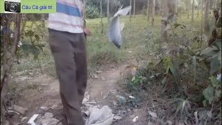 Fishing tilapia streams - Unusually small streams are fishing tilapia fish big