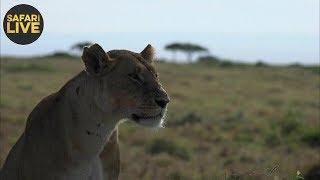 safariLIVE- Sunrise Safari - September 27, 2018
