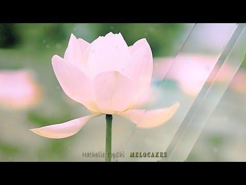 🎶Beautiful Romantic Instrumental Music & Visualizer🎶 Lotus