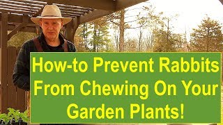 Tips and Ideas on How-to Prevent Rabbits from Chewing on Your Garden Plants