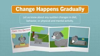 Ralston Vet's Senior Pet Care Tips
